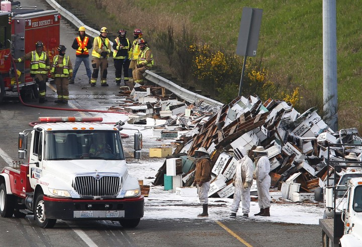 Highway abuzz with millions of bees after big truck tips