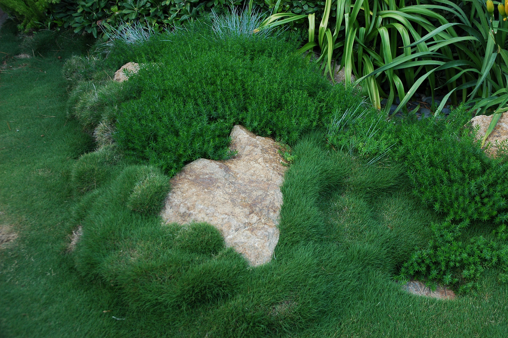 high traffic lawn alternatives with Low Maintenance Eco Friendly Lawns on Tired Of Mowing Try These Plants And Groundcovers Instead Pictures additionally 6 Easy And Alluring Water Saving Lawn Alternatives also 201368194147 likewise Fire Pit moreover Herniaria Glabra Green Carpet Rupturewort.
