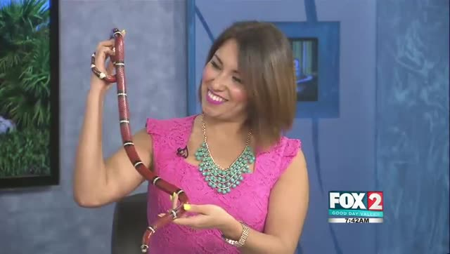 Meet Sebastian The Serpent From Gladys Porter Zoo
