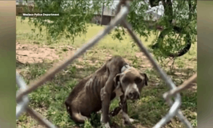 Two Arrested for Animal Cruelty