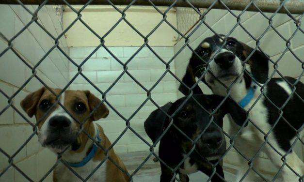 Animal Cruelty Now a Federal Felony
