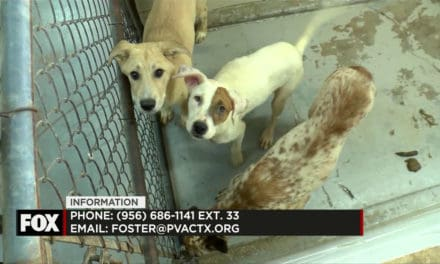 PVAS Seeking Foster Parents for Dogs in Need