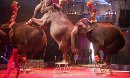 As Petition To Stop The Use Of Animals For Entertainment Circulates; Circus Urges Public To Decide For Themselves