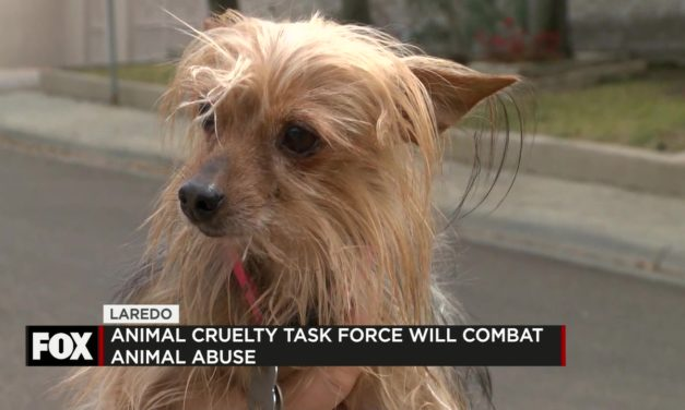 Laredo Implements City-wide Animal Cruelty Task Force