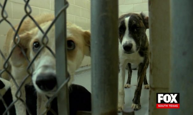 Palm Valley Animal Society Is Over-capacity And Needs Your Help